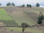 Terraced hillsides planted with  crops.